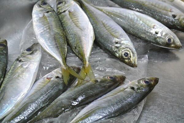 horse-mackerel-image-3